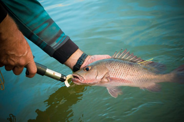 WHERE CAN YOU FIND MANGROVE SNAPPERS