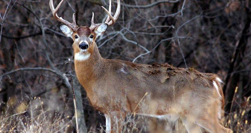 Best Choke for Buckshot Deer Hunting